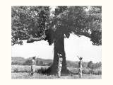 Historic Council Oak Tree at Willstown Mission
